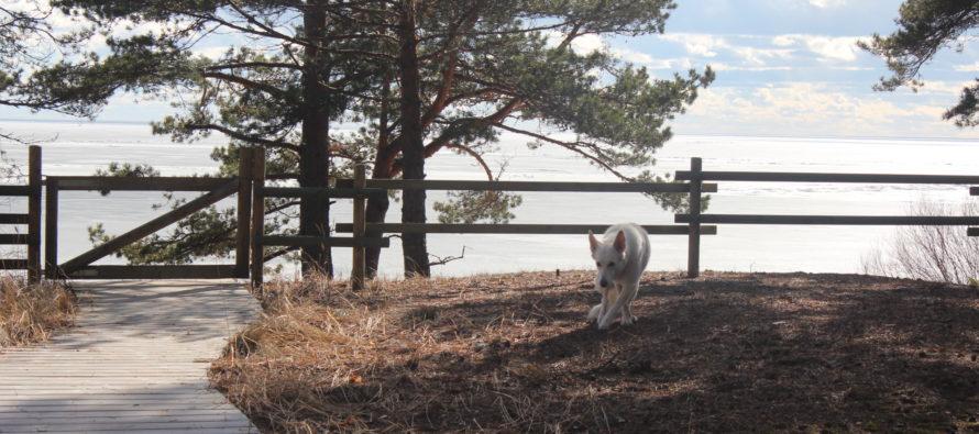Hemtrevligt möte vid sjön Peipus