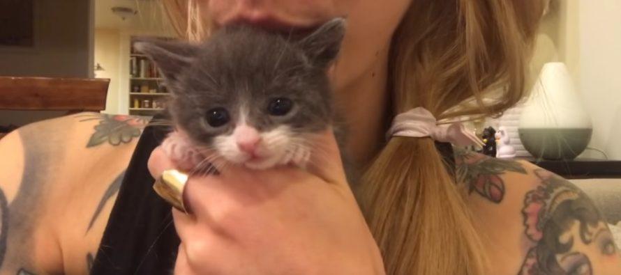 8 överraskande fakta om kattor för kattvänner