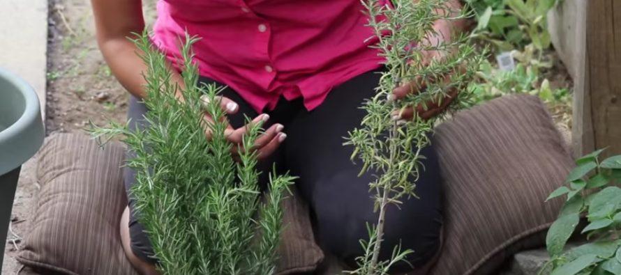 Helena-Reet: Idag skriver jag örtväxters magi!