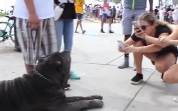 OTROLIGT stora hundar som verkligen existerar