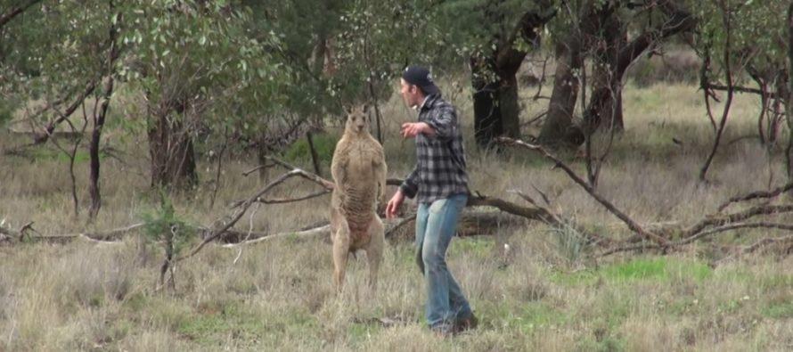 En man räddar sin hund från en känguru, men SEDAN GÖR någonting fult