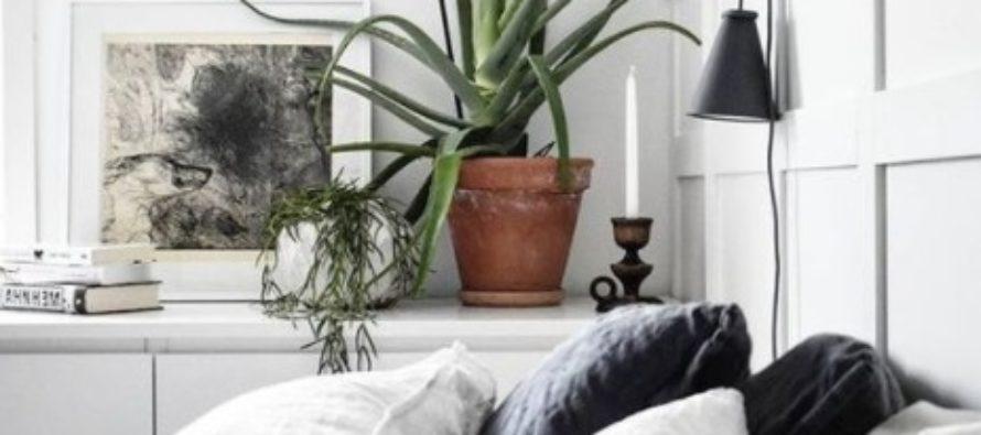 DESSA VÄXTER RENAR LUFTEN, SKAPAR FRED OCH GOD SÖMN – 10 KRUKVÄXTER, som vi borde ha i sovrummet